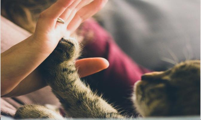 The hidden role of pets in the management of mental health problems – Guest blog from Dr Helen Brooks